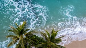 Preview wallpaper aerial view, palm, beach, sea