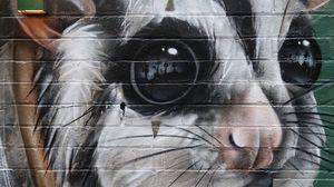 Preview wallpaper animal, graffiti, art, street art, wall