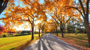 Preview wallpaper autumn, alley, park, trees