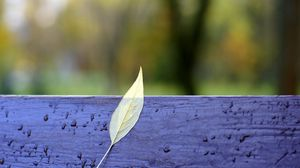 Preview wallpaper autumn, bench, leaves, yellow, drops