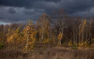Preview wallpaper autumn, clouds, trees, nature