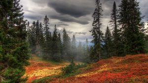 Preview wallpaper autumn, fog, trees, forest