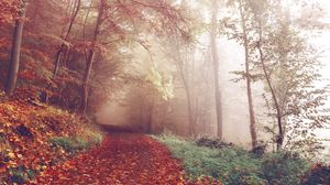 Preview wallpaper autumn, forest, fog, path