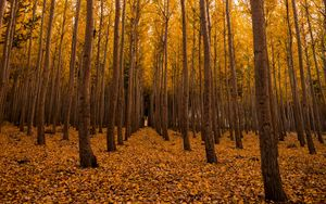 Preview wallpaper autumn, forest, foliage, trees