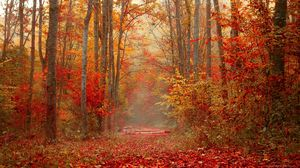 Preview wallpaper autumn, forest, foliage, trees, colorful