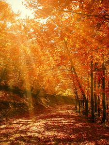 Preview wallpaper autumn, forest, park, foliage, sunlight