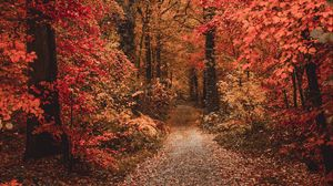 Preview wallpaper autumn, forest, path, foliage, trees, autumn colors