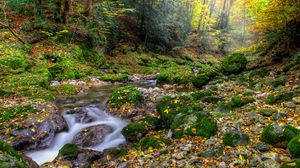 Preview wallpaper autumn, forest, river, rocks, landscape