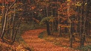 Preview wallpaper autumn, forest, trail, leaves, fallen, trees, turn