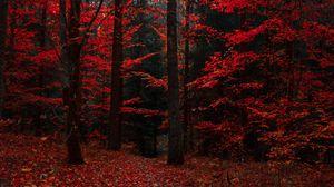 Preview wallpaper autumn, forest, trees, foliage, autumn colors
