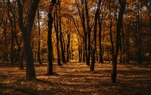Preview wallpaper autumn, forest, trees, park, path