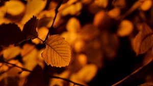 Preview wallpaper autumn, leaf, birch, orange
