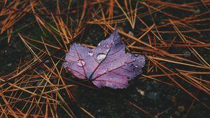 Preview wallpaper autumn, leaf, drops