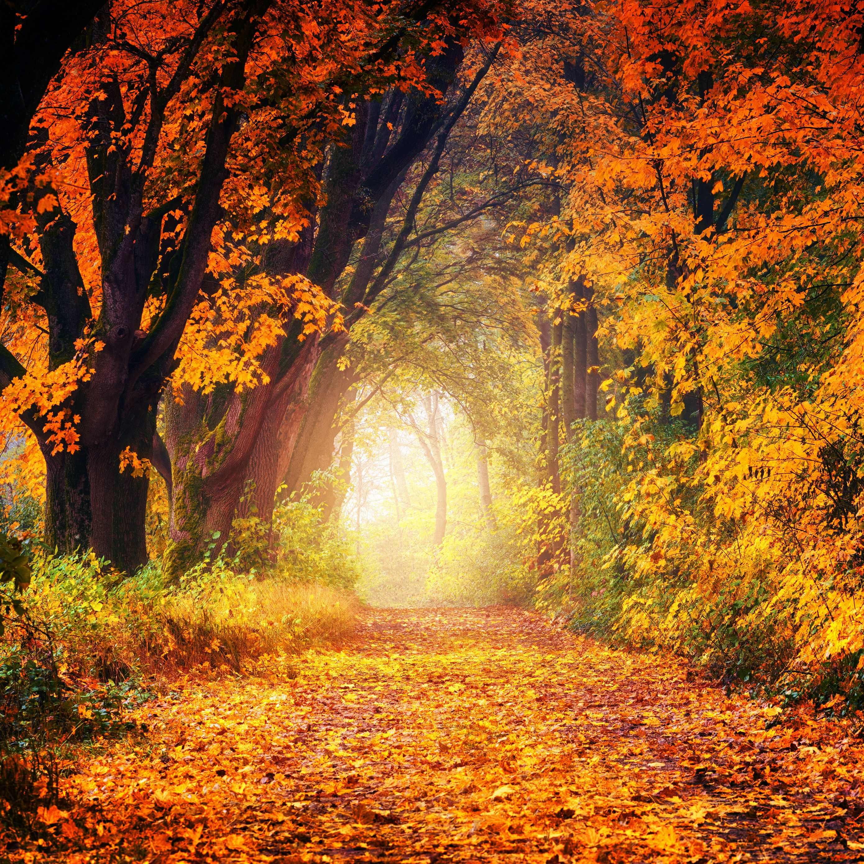 2780x2780 Wallpaper autumn, park, foliage, trees, path, light, golden
