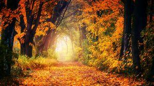 Preview wallpaper autumn, park, foliage, trees, path, light, golden