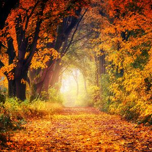 Preview wallpaper autumn, park, foliage, trees, path, light, golden
