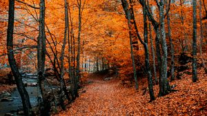 Preview wallpaper autumn, path, foliage, forest, trees, autumn colors