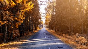 Preview wallpaper autumn, road, forest, sunlight