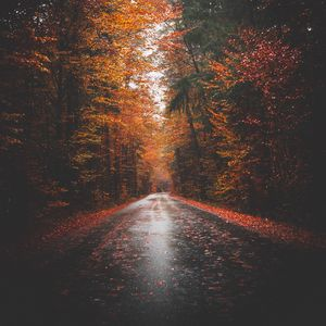 Preview wallpaper autumn, road, trees, forest, asphalt