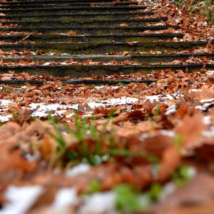 Preview wallpaper autumn, steps, foliage, snow