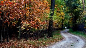 Preview wallpaper autumn, trail, trees, foliage