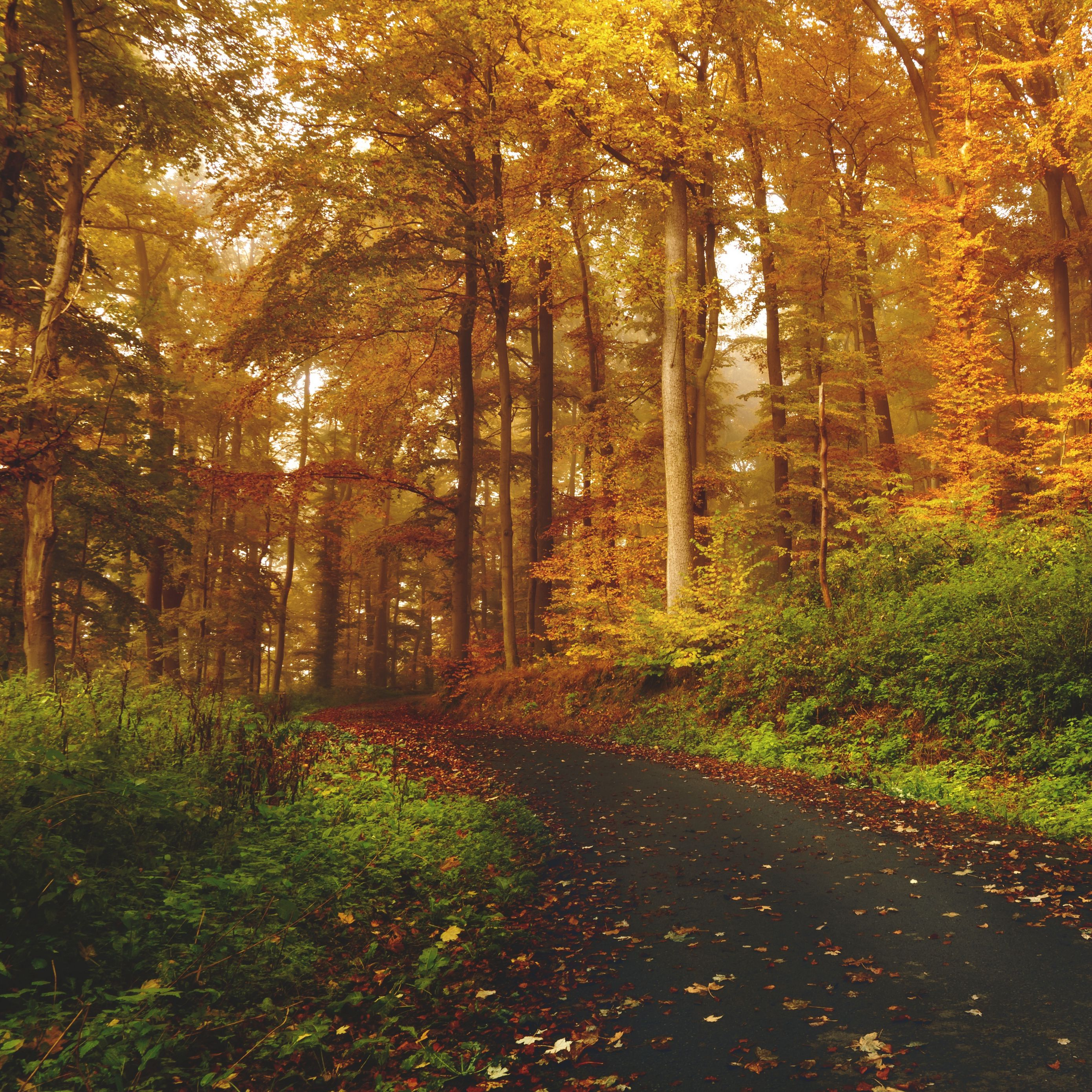 2780x2780 Wallpaper autumn, trees, forest, trail