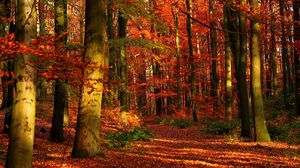 Preview wallpaper autumn, wood, leaves, trees, red, gleams