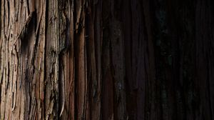 Preview wallpaper bark, wood, stripes, wooden, texture