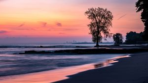 Preview wallpaper beach, coast, tree, dusk, dark