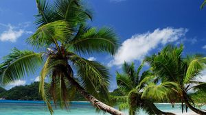 Preview wallpaper beach, tropics, sea, sand, palm trees, sandy