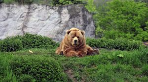 Preview wallpaper bear, brown, grass, funny, lie