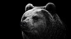 Preview Wallpaper Bear Grizzly Eyes Nose