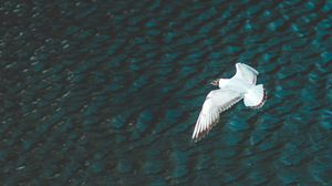 Preview wallpaper bird, flight, river, wings