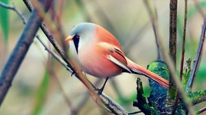 Preview wallpaper bird, pretty, sit, color