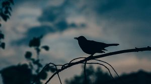 Preview wallpaper bird, silhouette, branch