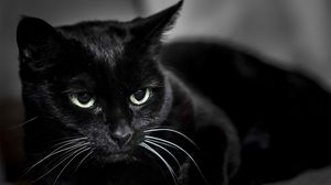 Black Cat Wallpapers Hd Desktop Backgrounds Images And Pictures