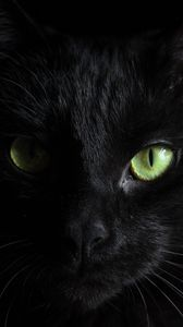 Preview wallpaper black cat, muzzle, look