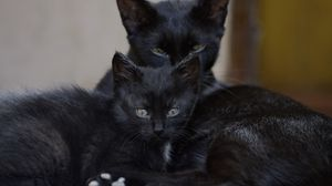 Preview wallpaper black cats, family, kitten, look