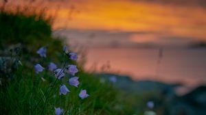 Preview wallpaper bluebells, wildflowers, summer, grass