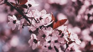 Preview wallpaper branch, bloom, flowers, spring, blur