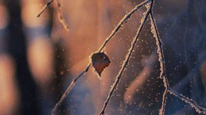 Preview wallpaper branch, frost, glare, bokeh, snow, winter, macro
