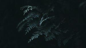 Preview wallpaper branch, thuja, needles, dark, green