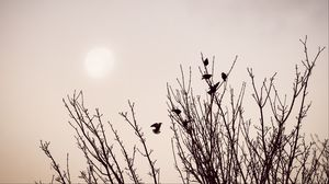 Preview wallpaper branches, birds, minimalism
