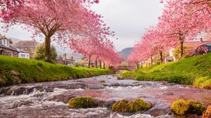 Preview wallpaper bridge, river, flow, sakura