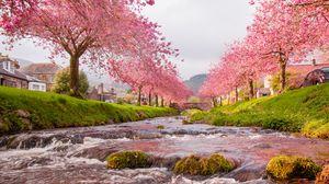 Preview wallpaper bridge, river, flow, sakura