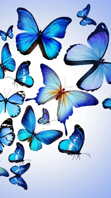 360x640 Wallpaper butterfly, colorful, blue, drawing, art, beautiful