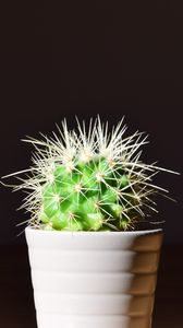 Preview wallpaper cactus, flower, thorns, houseplant