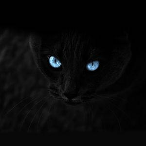 Preview wallpaper cat, black, blue-eyed, glance