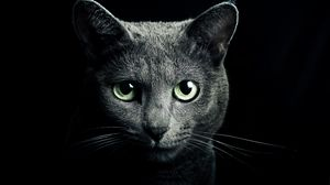 Preview Wallpaper Cat Black Breed Russian Blue Eyes Green