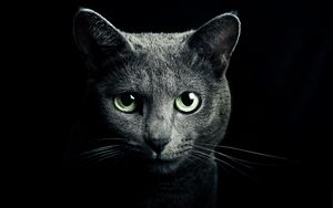 Preview wallpaper cat, black, breed, russian, blue eyes, green eyes, black background